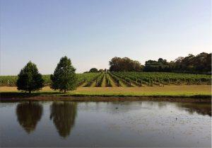 Tertini-vineyard