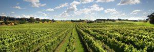Edit Page ‹ Tertini Wines — WordPress