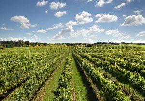 vineyards-img-new